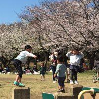 桜満開の講演で